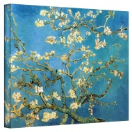 Art Wall 20-Inch by 24-Inch Branches of an Almond Tree in Blossom Gallery Wrapped Canvas Art